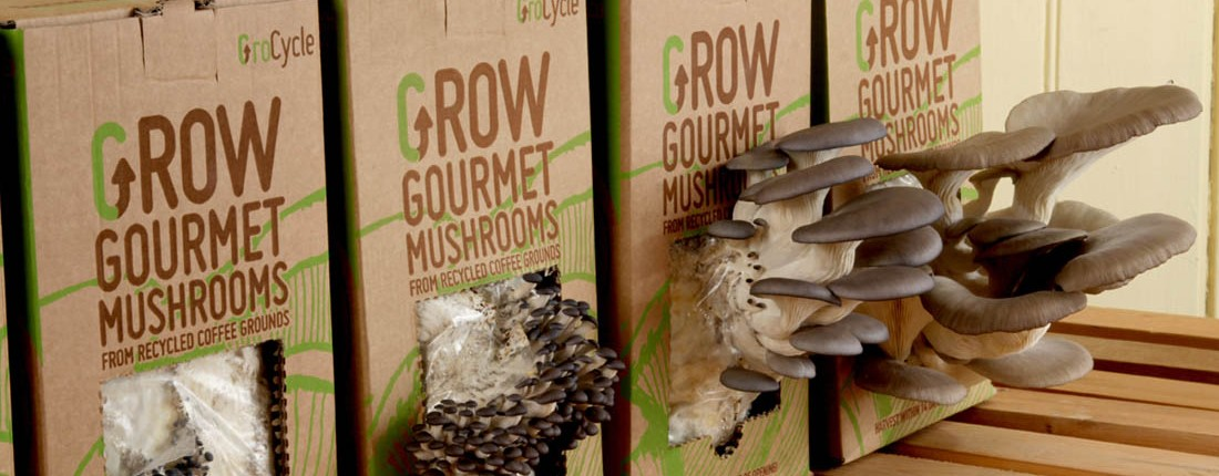 oyster mushroom growing instructions