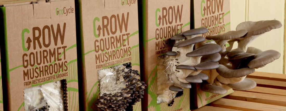 oyster mushroom growing instructions